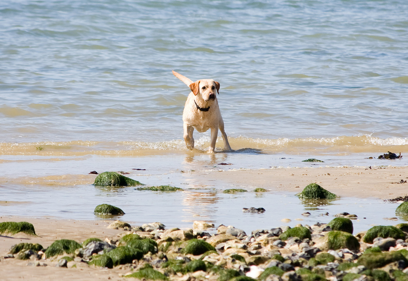 Top 10 Dog Friendly Beaches For Summer Sykes Holiday