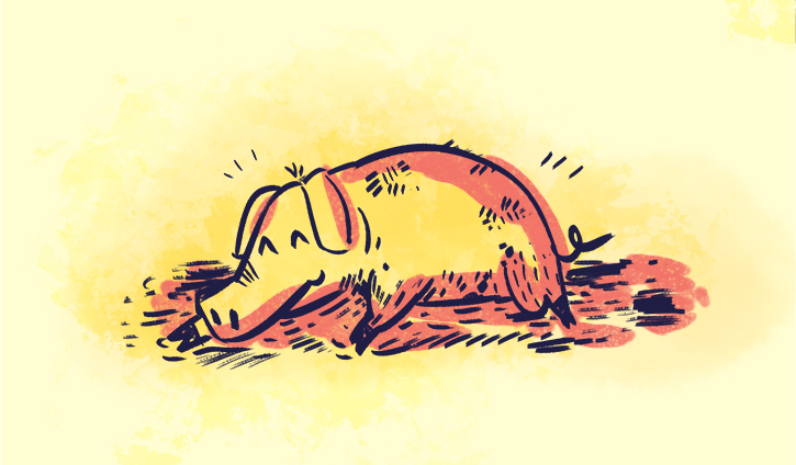 happy-as-a-pig-in-muck