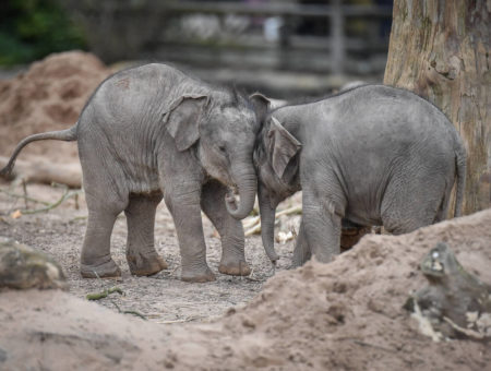 chester zoo elephant keeper