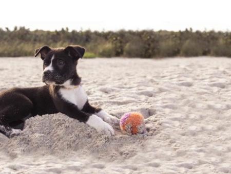 devon dog friendly beaches feature