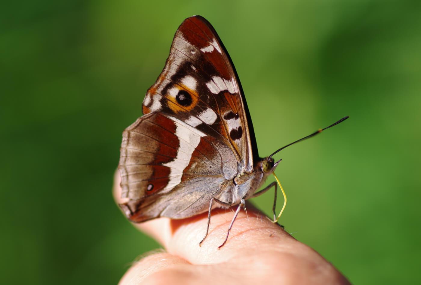 yorkshire wildlife feature
