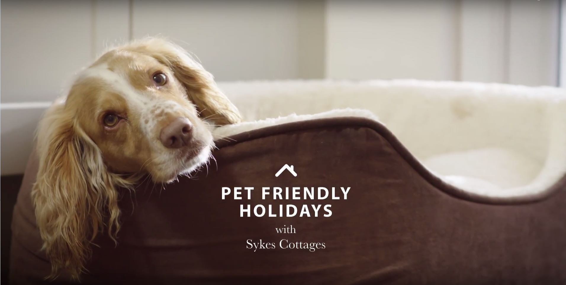 pet friendly holidays - sykes cottages