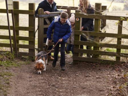 Dog friendly walks in dorset
