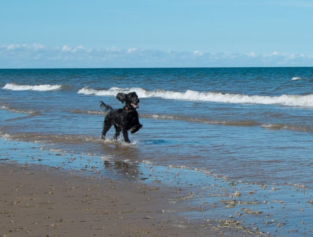 dog friendly beaches norfolk