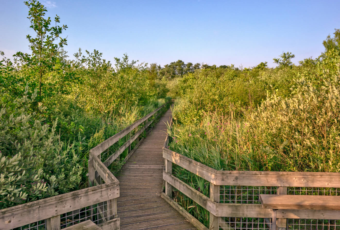 norfolk nature reserves and wildlife