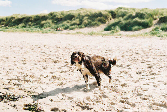 Top 10 dog-friendly destinations in the UK - Sykes Holiday Cottages