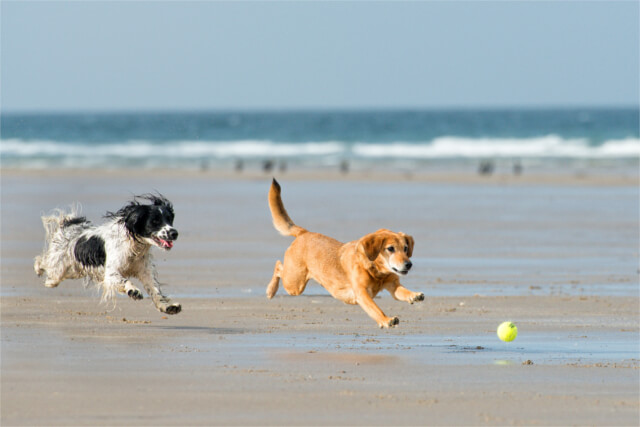 Dogs running on the beach