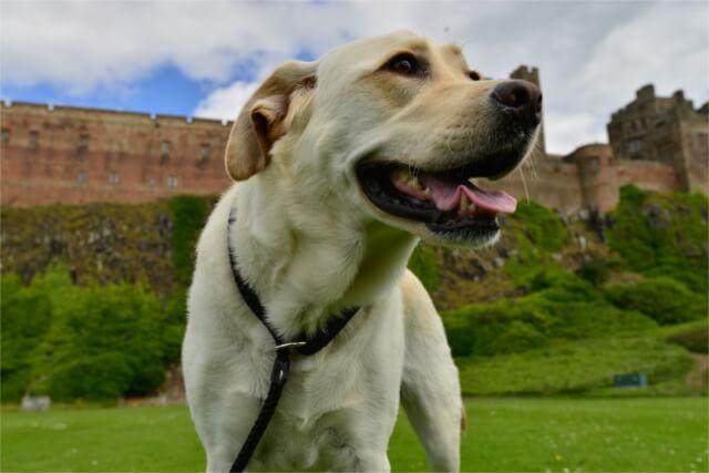 Dog in Devon