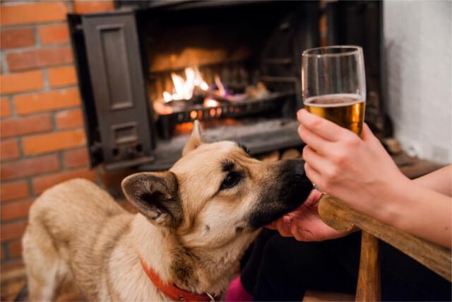 Dog friendly pub