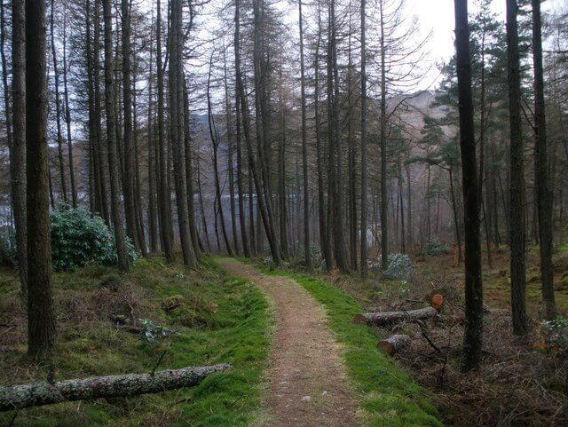 Loch Lomond woodland