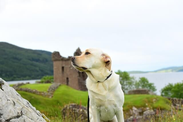Dog at a castle