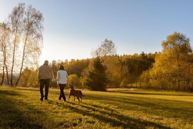 Countryside Dog Walking