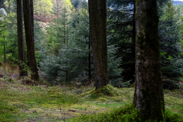 Grizedale Forest, Lake District