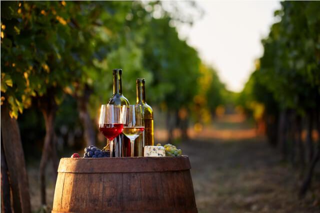 Vineyard wine bottles