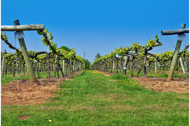 Three Choirs Vineyard, Cotswolds