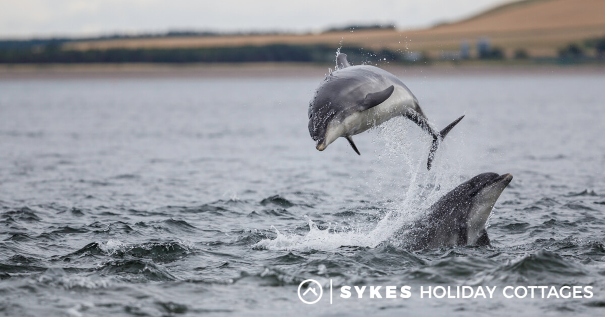 16 Rare And Unusual Animals You Can Find In The Uk Sykes Holiday Cottages