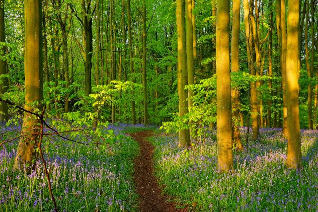 Cooper's Hill Woods