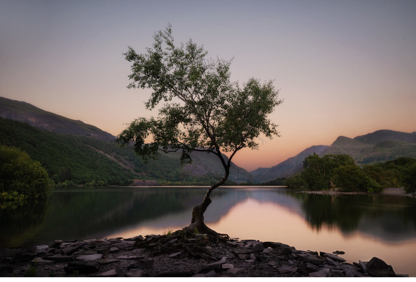 The Lonely Tree, North Wales