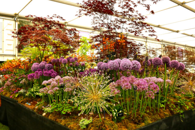 flower display at chelsea flower show