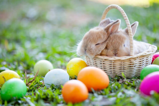 bunnies in a basket surrounded by Easter eggs