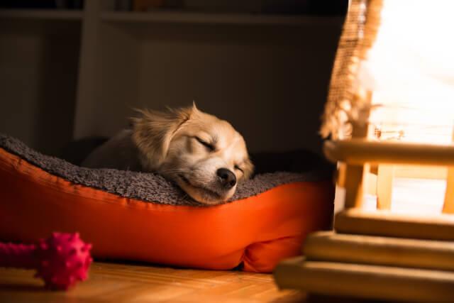 Dog sleeping in a basket
