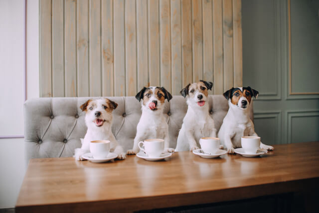 dogs sat in front of coffee cups in a cafe