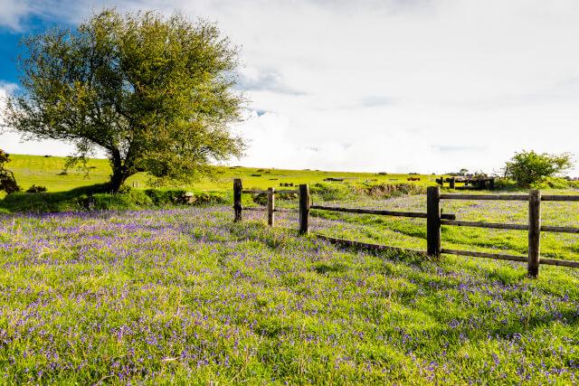 Countryside in Devon