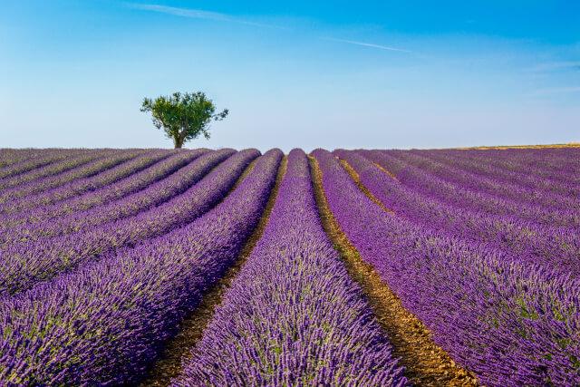 Plateau de Valensole, France