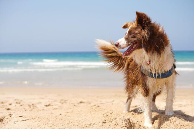 Dog on Bacton Beach