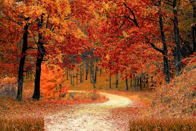 Seeds Autumn uk