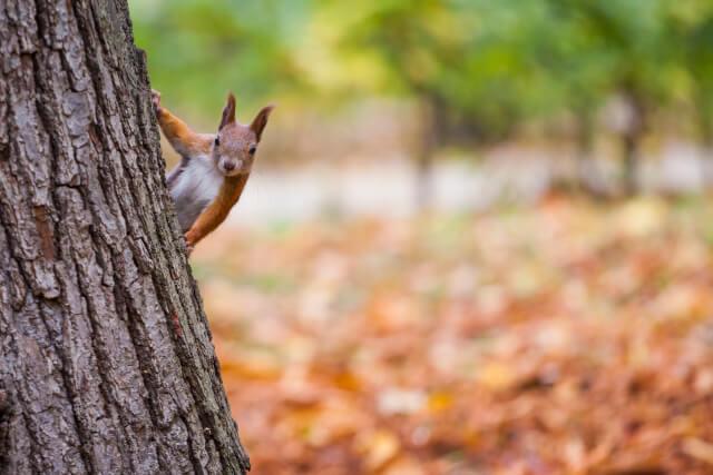 Squirrel during Autumn UK