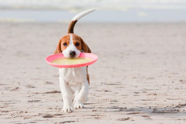 Dog with a frisbee on Waxham Beach