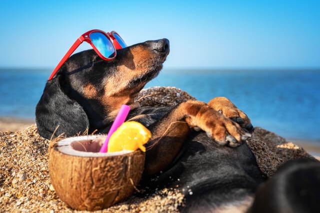 Dog on Wells next the Sea Beach