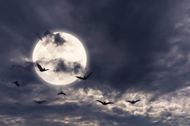 bats around the full moon