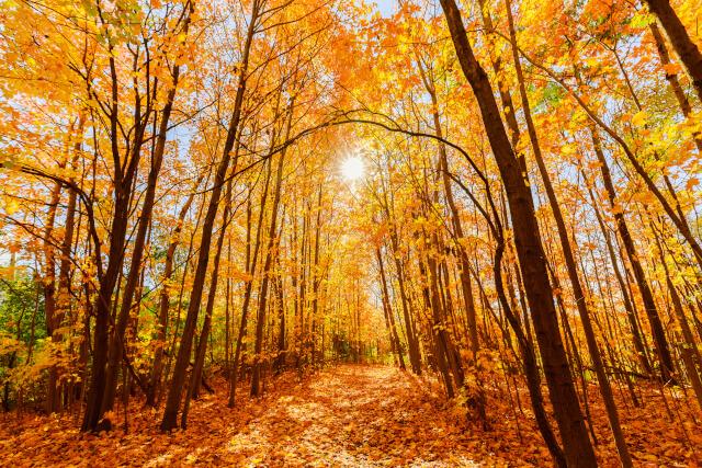 Autumn UK colours