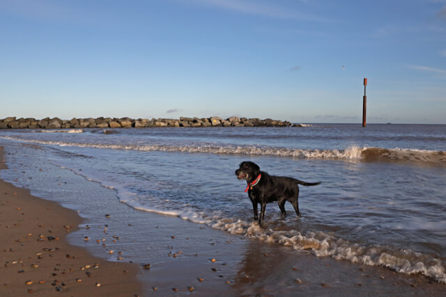 Dog on beach at Eccles on Sea, Norfolk