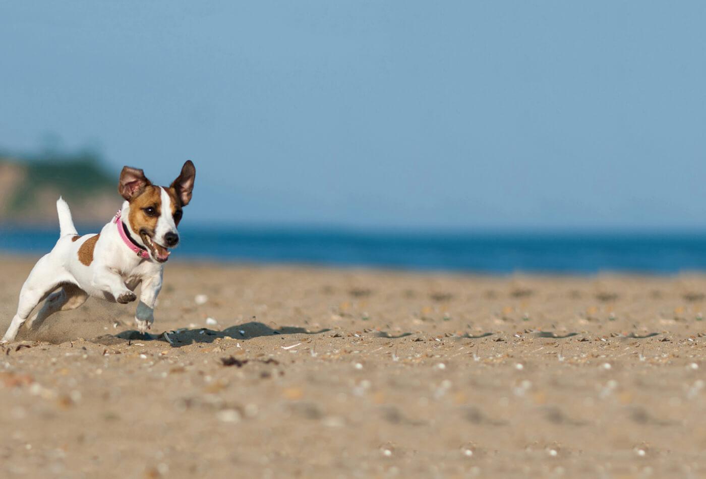 dog friendly destinations - dog running on beach
