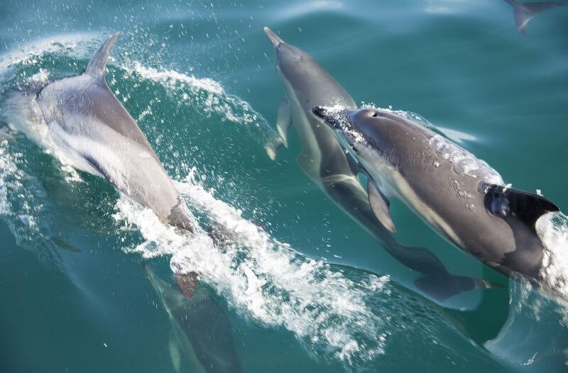 AK Wildlife Cruises
