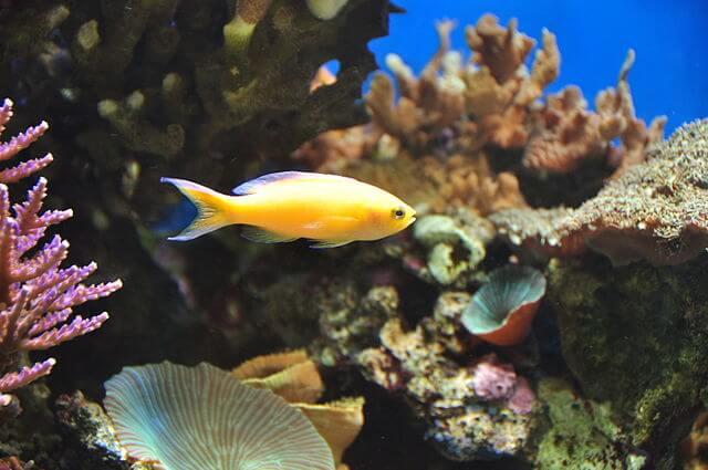 Blue Reef Aquarium Newquay