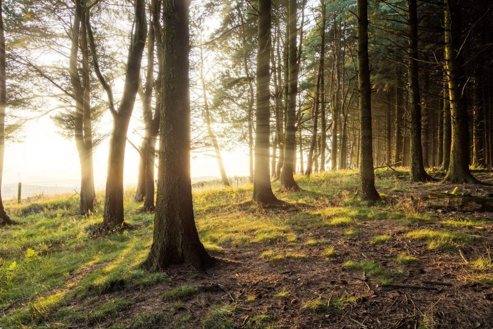 Grizedale Forest Feature