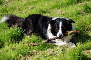 Experience something new at the Lake District Sheepdog Experience