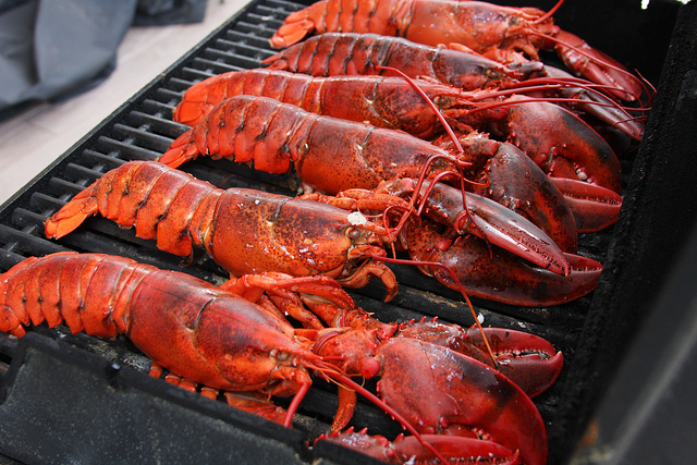 Cooked Cornish lobster