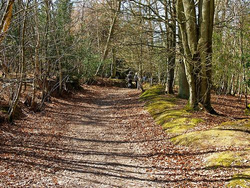 Walkin Ashdown Forest