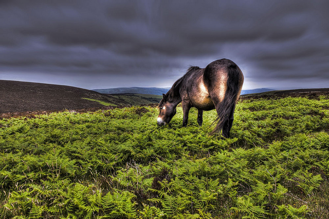 Exmoor- Via Flickr