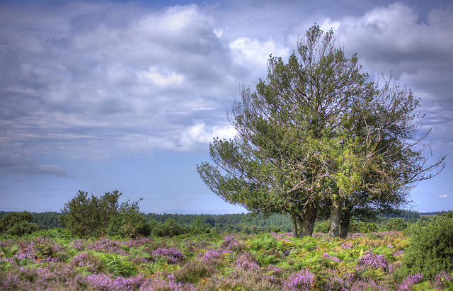 The New Forest- Via Flickr