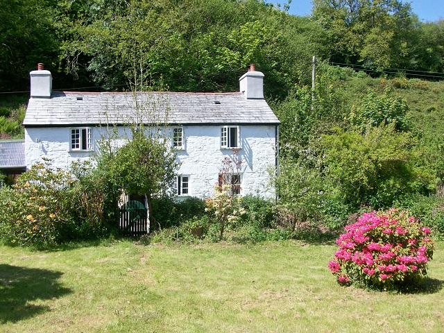 Foxgloves | Liskeard, Cornwall | Ref: 18318