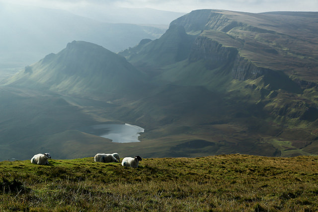 'Sheep in Isle of Skye' by Y Nakanishi is licensed under CC 2.0