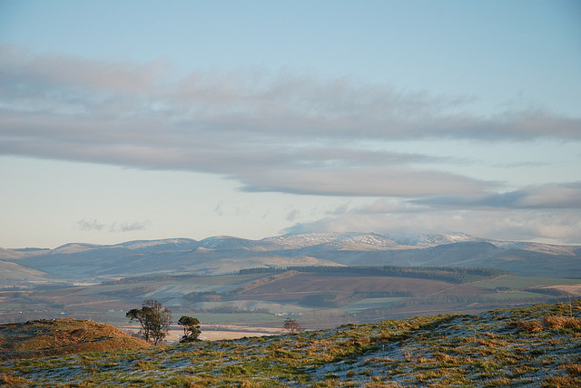 Cheviots with Snow by Caroline Ingram / CC BY-ND 2.0