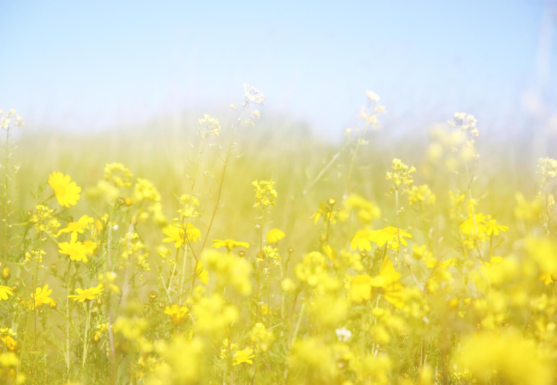 spring-flowers-shutterstock_248750113-1