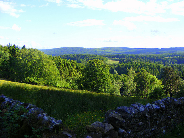 Kielder Forest by Jo Jakeman / CC BY 2.0